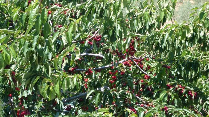 Frutos rojos que se mezclan con las hojas engalanan el paisaje